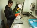 Žuvų inventorizacija