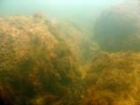 Baltijos rifai