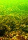 Baltijos jūros rifai